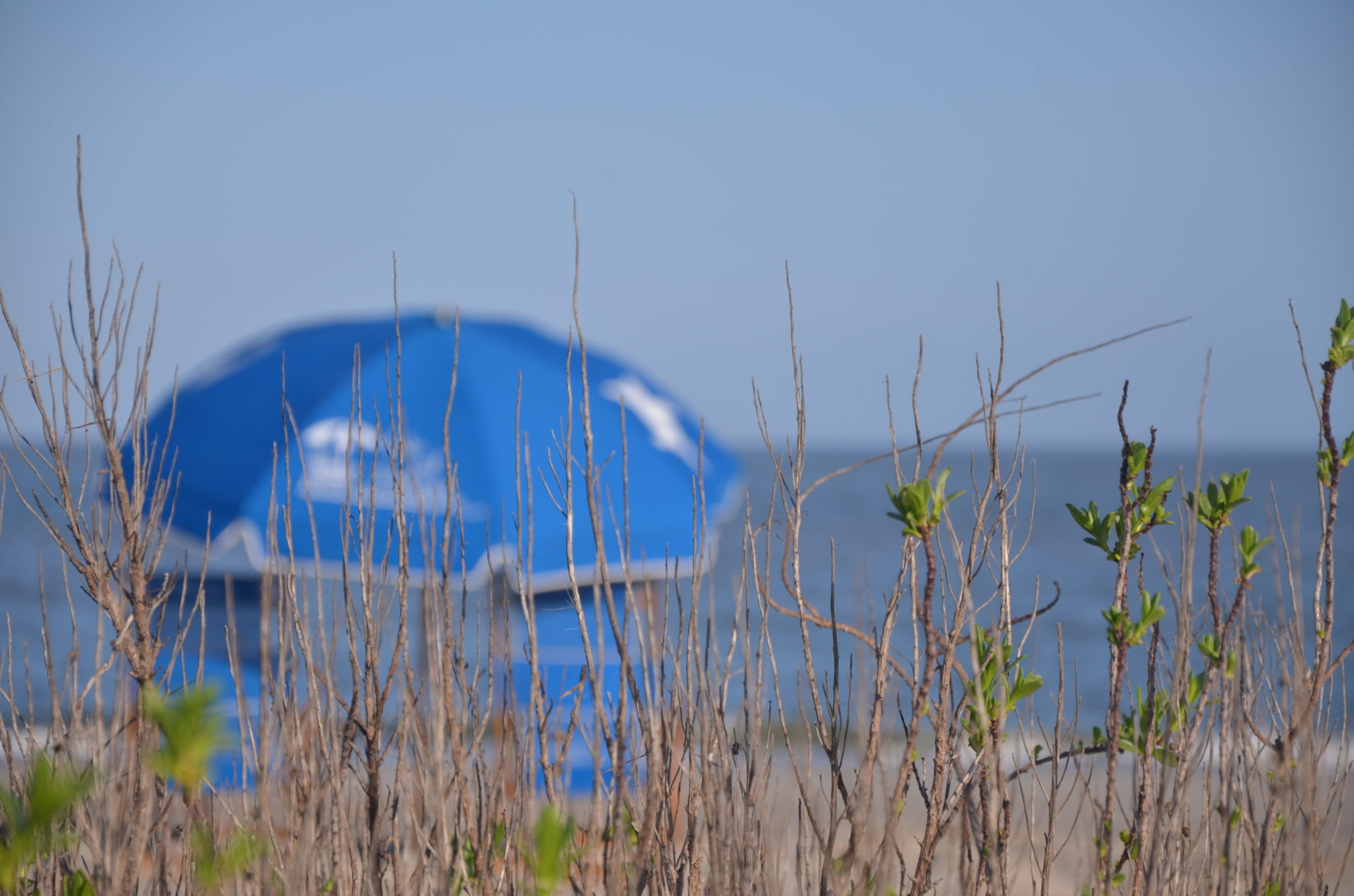 Beach Day Isle of Palms